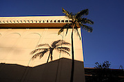 Palm tree shadow on wall. Waikiki, Hawaii