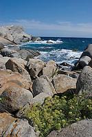 France: Corsica, Lavezzi Islands, coastline, granite rocks