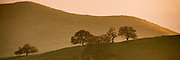 Panorama of golden Hills and oaks on the central California coast