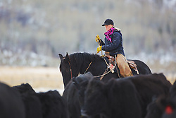 Wyoming cowgirl/rancher, Skye Clark Working cows, Afton Wyoming<br /> <br /> The cowboys of the west are under assault because many don't like to see their cows on public land. I have written a couple of articles articulating the problem. My photos are not to be used for anti public land ranching interests.