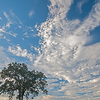 Clouds soar above oak trees in the California Coastal Mountains on Hunter-Ligget Military Reservation.