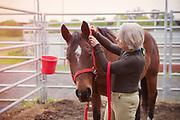 Mature women tending to a horse.