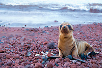 It is a touching feeling to see a baby sea lion searching desperately for his mother. Every time I look at the eyes of this pup, I feel overwhelmed by the fragility and sadness they express.