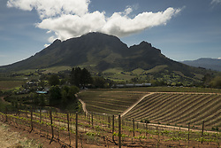 Oct. 1, 2012 - Stellenbosch, Western Cape, South Africa - Stellenbosch and Franschhoek in the Western Cape are known for their wines and food. Tourist enjoy the food, wine and views from a young vineyard at Delaire Graff Estate.   Photos taken in South Africa by Anacleto Rapping ©2012 (Credit Image: © Anacleto Rapping/ZUMA Wire/ZUMAPRESS.com)