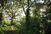 The forest, Tufi, Cape Nelson, Oro Province, Papua New Guinea