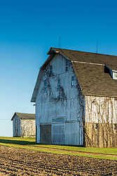 Old wood framed barn with vines growing on it standing in a barn lot near a plowed grain field