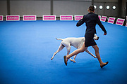 Woman training a dog for the upcoming ring competition at the Leipzig Trade Fair. Over 31,000 dogs from 73 nations will come together from 8-12 November 2017 in Leipzig for the biggest dog show in the world.