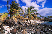 Coconut palms on coral and lava beach at Lapakahi State Historical Park, Kohala Coast, The Big Island, Hawaii