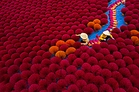Aerial view of Vietnamese workers picking incense sticks from an incense field in Huyện Ứng Hòa, Hanoi, Vietnam.