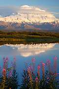 Fireweed and Mt. McKinley, locally known as Denali, at at Reflection Pond, Denali National Park, Alaska.