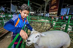 O aluno Alan Bonilha da E. E. E. F. Canada, de Viamão, visita a 38ª Expointer, que ocorre entre 29 de agosto e 06 de setembro de 2015 no Parque de Exposições Assis Brasil, em Esteio. FOTO: André Feltes/ Agência Preview