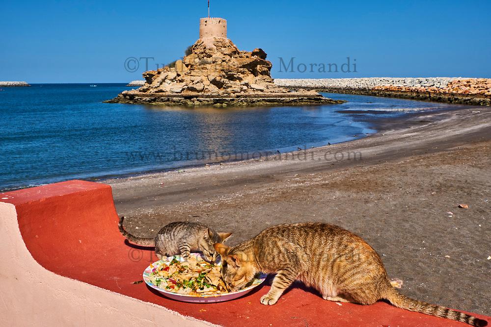 Sultanat d'Oman, gouvernorat de Muscate, Quriyat, village de pêcheur, chat des rues // Sultanat of Oman, Gulf of Oman, Mascat, Quriyat District, Quriyat, a fishing village, beach and watchtower, street cat