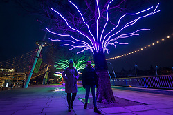 "© Licensed to London News Pictures. 07/12/2020. LONDON, UK. Members of the public walk by ""Lumen"" by David Ogle, trees illuminated with glowing neon flex. Preview of ""Winter Light"" presented by Southbank Centre.  Over 15 artworks and new illuminated commissions by a range of leading international artists are on display around the site's buildings and the Riverside Walk until the end of February 2021.  Photo credit: Stephen Chung/LNP"