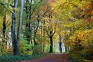 Herbst :: Autumn
