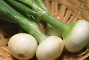 Close up selective focus photograph of a selection of Bulb Scallions