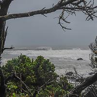 Pine trees in the Mendocino Coast Botanical Gardens frame Pacific ocean surf near Fort Bragg, California.