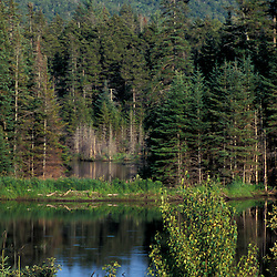 Randolph, NH. A beaver pond near the Moose River in New Hampshire's White Mountains. Androscoggin River watershed.