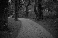 Stone Pathway in a Wooded Park -- Gdansk. Image taken with a Leica X2 camera (ISO 400, 24 mm, f/4, 1/250 sec). In camera B&W image.