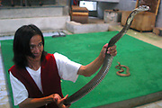 A man displays his Python snake at a show in a local snake farm tourist attraction. Koh Samui, Thailand