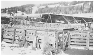 """Sheep loading at RGS Lizard Head stock pens. Leased D&RGW #464 is working car positioning while partly inside the snowshed.<br /> RGS  Lizard Head, CO  Taken by Wolford, Henry - ca. 1946-1947<br /> In book """"Rio Grande Southern II, The: An Ultimate Pictorial Study"""" page 279<br /> Also in """"RGS Story Vol. X"""", p. 312."""