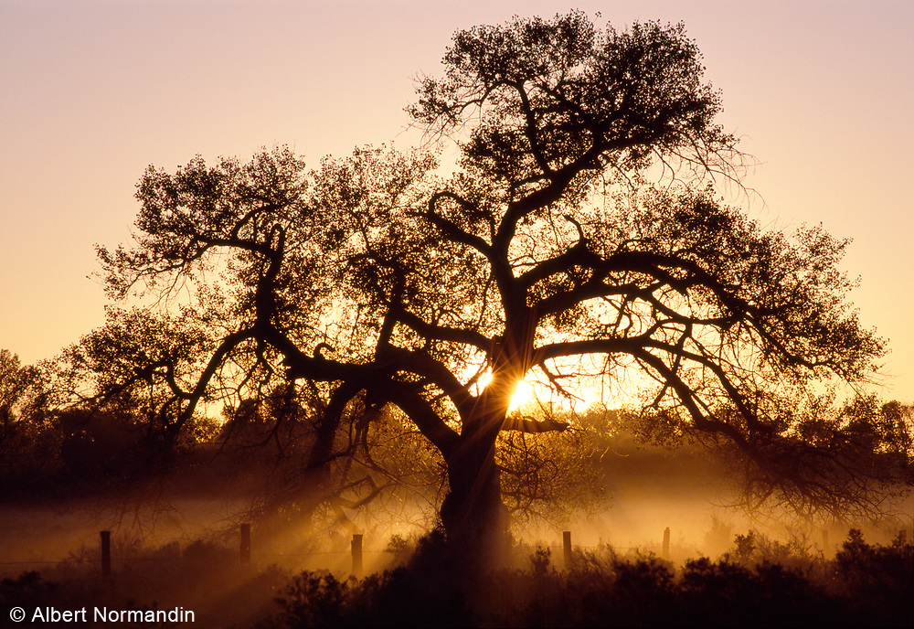 Tree with sunrise rays coming through dust