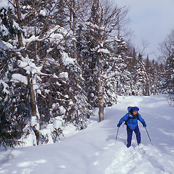 Rangely, ME.Backcountry skiing on Maine's Saddleback Mountain. Northern Forest.