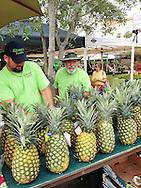 USA: Florida: Sarasota County: Sarasota: Kinsey's Produce display of pineapples at Sarasota Farmer's Market in downtown Sarasota. iPhone photo.