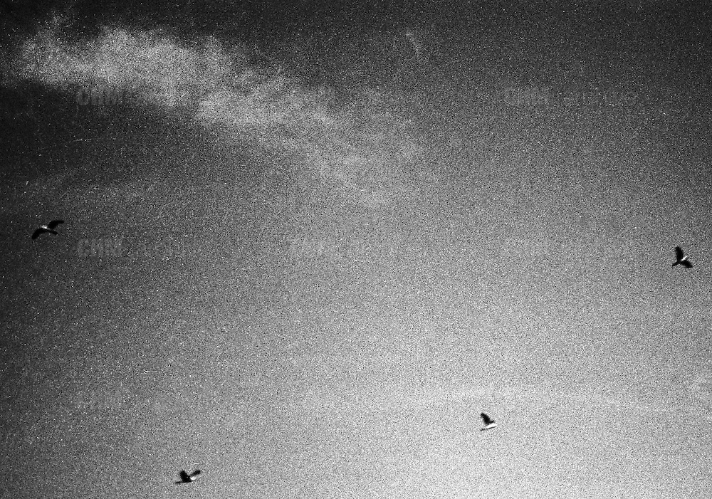 Niente suoni, io e te soli<br /> io e te soli, io e te soli.<br /> <br /> luglio  2016 . Daniele Stefanini /  OneShot
