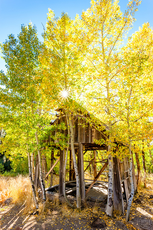 """""""Shack in the Aspens 9"""" - Photograph of an old shack in among aspens with yellow fall colors."""