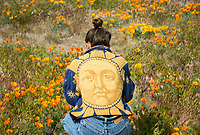 A young photographer shoots poppies at the Antelope Valley Poppy Reserver April 11,  2017  Photo by David Sprague