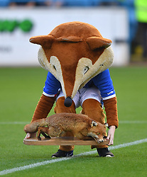 Olga the Carlisle United club mascot brings out the famous fox before the game