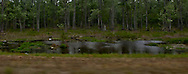 a swamp forest is seen along US 90 highway in Louisiana, USA panorama with motion blur in the foreground