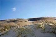 Nederland, The Netherlands, Monster, 12-3-2020 Duinen met zand,  helmgras bij de zee, noordzee . Foto: Flip Franssen
