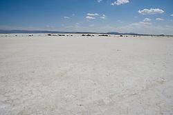 Salt Flats near Guadalupe Peak, Texas.
