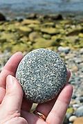 Woman's hand holding granite beach stone, locally known as 'cobbles,' Eastern Head, Isle au Haut, Maine.