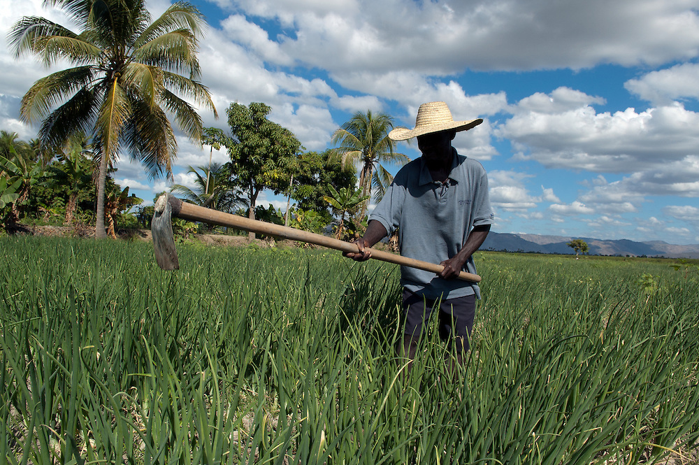 A Haitian peasant working in an onion field. Artibonite Valley, Haiti. January 22, 2008.