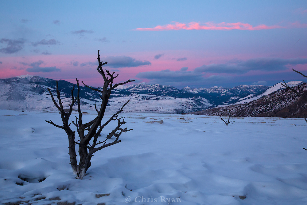 Snowy landscape at dusk, Yellowstone National Park