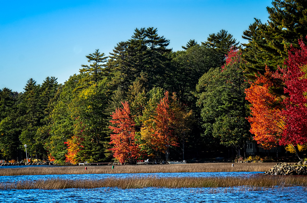 A Autumn Scene in Midcoast Maine of a waterway with reeds growing in the water.