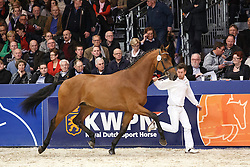 456 - Golden Boy<br /> KWPN Stallion Selection - 's Hertogenbosch 2014<br /> © Dirk Caremans