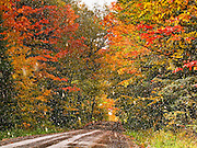 A fresh snow shower dapples maple and other trees in late September in Superior National Forest, Minnesota, USA. Drive a gravel Forest Service road for easy access.