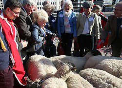 © Licensed to London News Pictures. 27/09/2015. London, UK. Barbara Windsor (3L) is rescued as she is jostled by the flock as she exercises her right as a Freeman of the City of London to drive sheep across London Bridge. Photo credit: Peter Macdiarmid/LNP