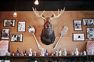A taxidermied bull moose displayed as a prominent wall decoration between a spoon and fork inside the 49th State Brewing Company restaurant in Healy, Alaska.