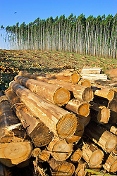 Produção de madeira na metade sul do Estado. FOTO: Jefferson Bernardes/ Agência Preview