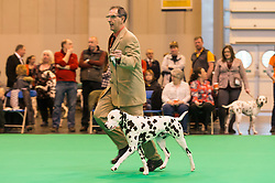 © Licensed to London News Pictures. 10/03/2016. A dog owner with their Dalmatian dog on the judging show floor during competition . Crufts celebrates its 12th anniversary as the Worlds largest dog show. Birmingham, UK. Photo credit: Ray Tang/LNP