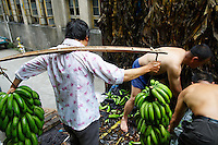 Chine, Province de Anhui, ville de Tunxi, dechargement de bananes // China, Anhui province, city of Tunxi, unloading of banana