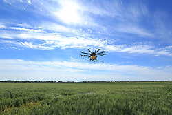 June 27, 2017 - China - Xinjiang, CHINA-June 27 2017: (EDITORIAL USE ONLY. CHINA OUT) Farmers spray pesticide with unmanned aerial vehicle in wheat fields in northwest China's Xinjiang Uygur Autonomous Region, June 27th, 2017. (Credit Image: © SIPA Asia via ZUMA Wire)
