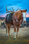 Horse at sunrise on a ranch in northeastern Wyoming