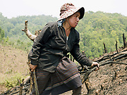 A Phunoi ethnic minority subsistence farmer clears her land by slashing and burning to grow hill rice and coffee as a cash crop in Ban Sinesai; Phongsaly province, Lao PDR.  Swidden cultivation or 'hai' in Lao consists of cutting the natural vegetation, leaving it to dry and then burning it for temporary cropping of the land, the ash acting as a natural fertiliser. Shifting cultivation practices, although remarkably sustainable and adapted to their environment in the past, have come under increasing stress in recent decades and are now starting to be a major problem in Lao PDR, causing widespread deforestation and watershed degradation. The practise is gradually being taken over by the planting of permanent cash crops such as coffee.