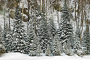 Hillside in winter <br /> Morin Heights<br /> Quebec<br /> Canada