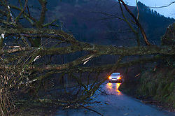 © Licensed to London News Pictures. 03/03/2019. Llanwrtyd Wells, Powys, Wales, UK. A tree taken out by gale force winds blocks the road and brings down an electric power line between Llanwrtyd Wells and Abergwesyn in Powys, Wales, UK. as storm Freya continues to hit Powys in Mid Wales, UK. Photo credit: Graham M. Lawrence/LNP